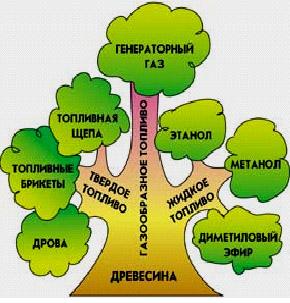 биоэнергетика 2.jpg